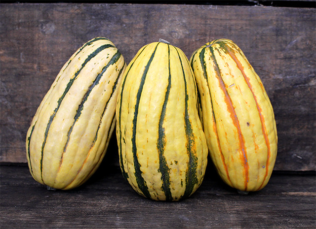 A Guide to Winter Squash