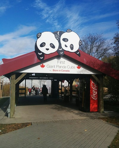 First Giant Panda Cubs #toronto #torontozoo #pandas #giantpandaexperience #sign #gate #latergram