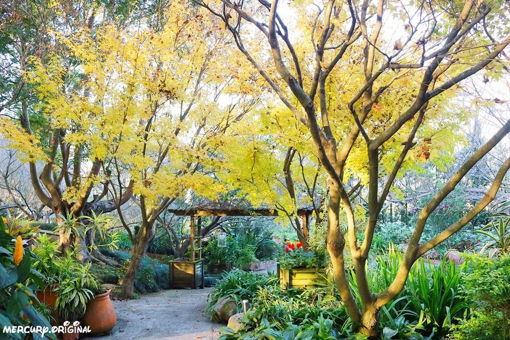 39159873722 afc4162190 b - 熱血採訪|新社千樺花園餐廳,森林裡的玻璃屋咖啡廳,品嚐無菜單法式料理