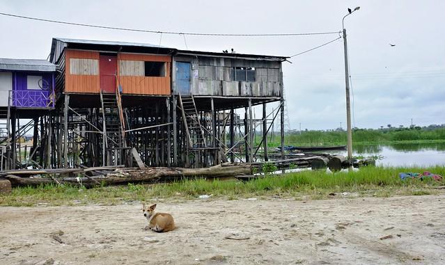 Dog in Nanay