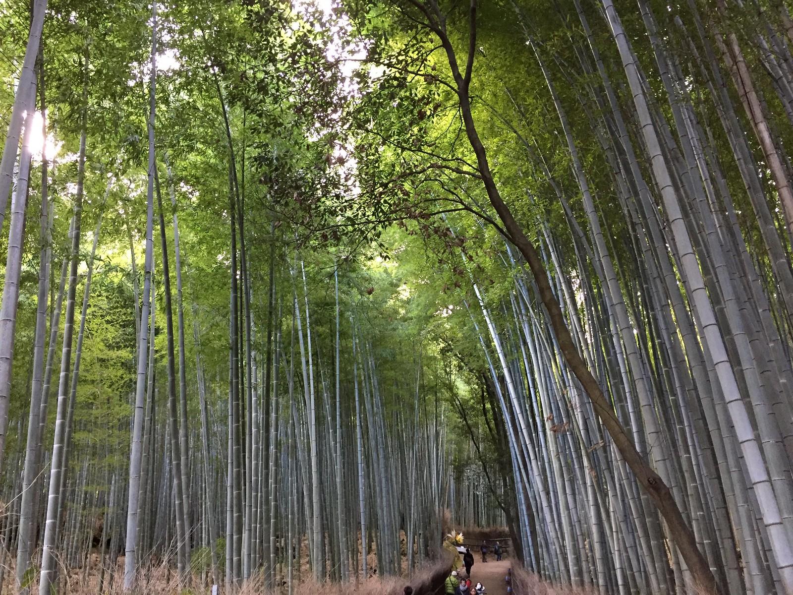 18. Bamboo Grove