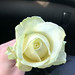 Funeral White Rose