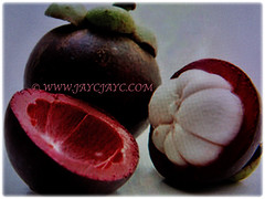 Fibrous red rind of Garcinia mangostana protects the snow-white segments of Garcinia mangostana (Mangosteen, Purple Mangosteen, Manggis in Malay), 14 Dec 2017