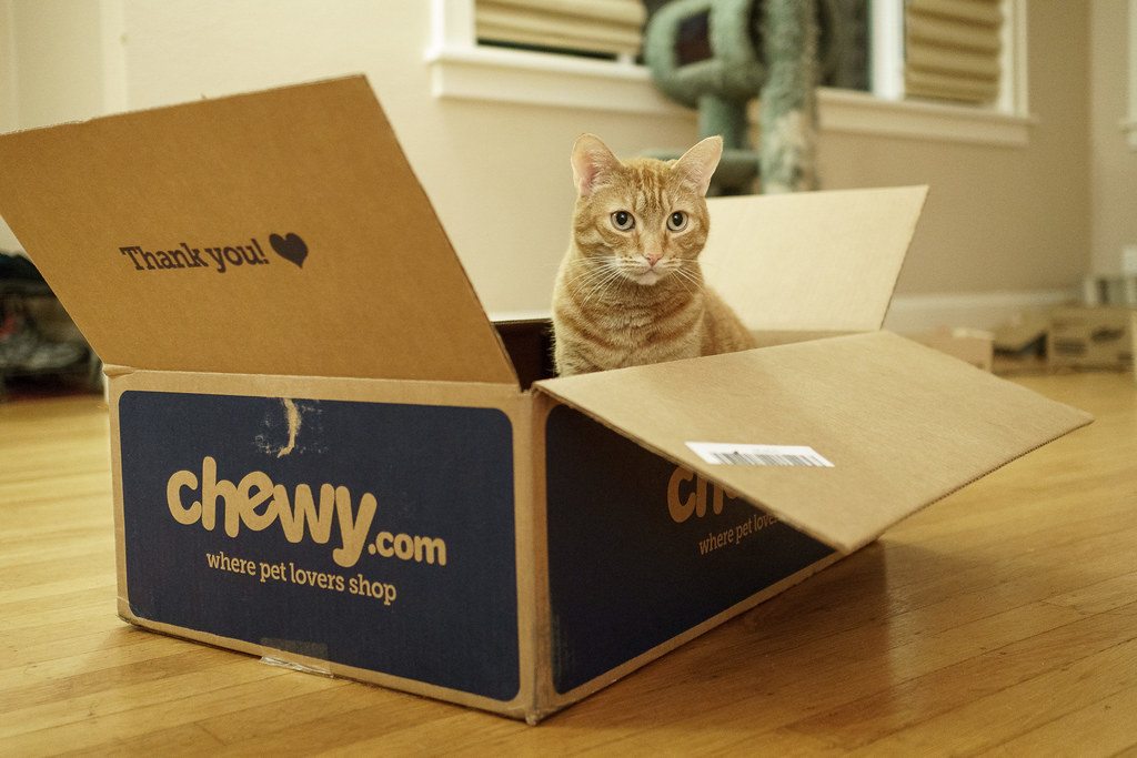 Our cat Sam sits in a box from chewy.com
