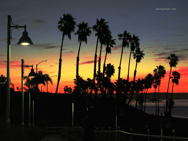 Dawn Long Beach Palms