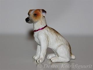 Jack Russel Terrier #3