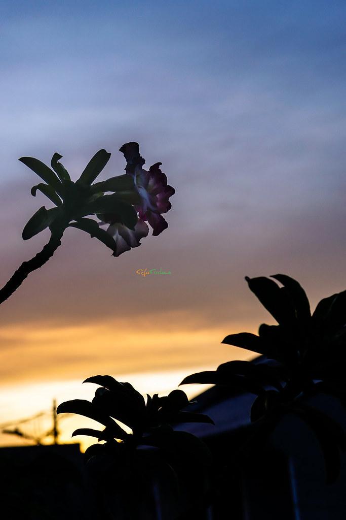 Sunrise-311217