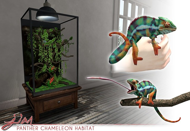 JIAN Panther Chameleon ( Collabor88 )