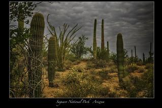 Saguaro National Park - Arizona