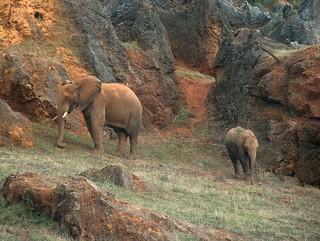 elefante_2
