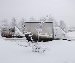DSCF6469-SNOW