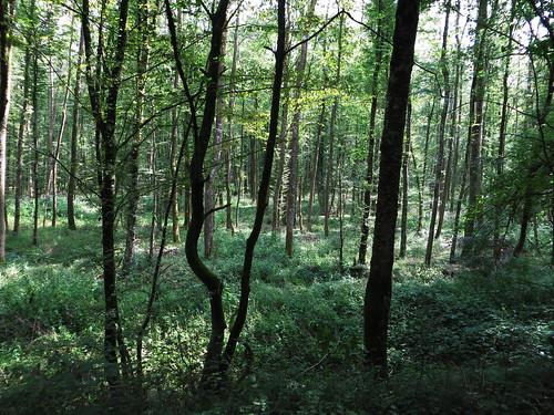 20140803 01 197 Jakobus Wald Bäume