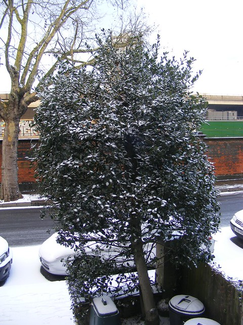 snow in my front garden