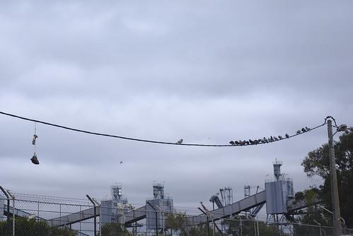 Birds on a wire #trafaria #street #t3mujinpack