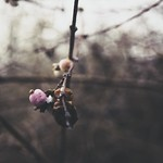 2018:01:21 15:51:21 - Fruit - Nature - Bokeh
