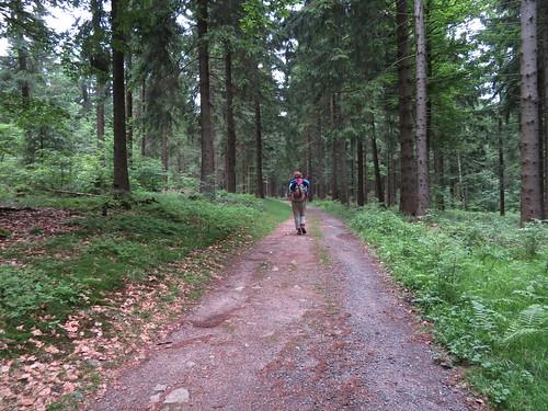 20170605 07 143 Regia Wald Weg Pilger ElisabethB