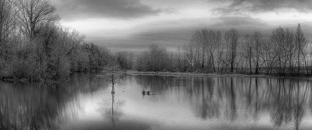 Winter-Bayou