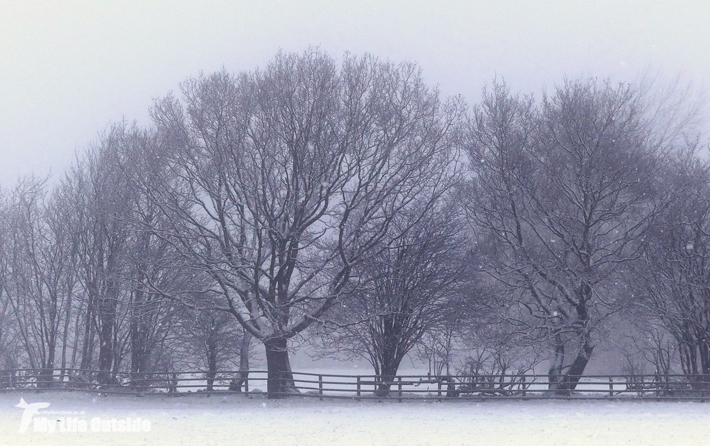 P1130203 - December Snow in Leeds
