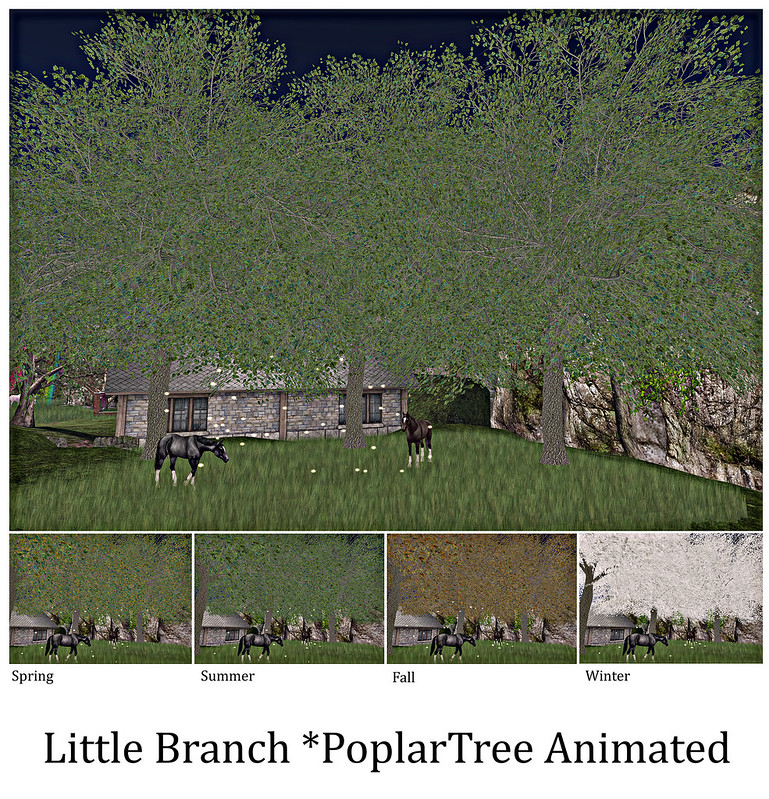Little Branch PoplarTree