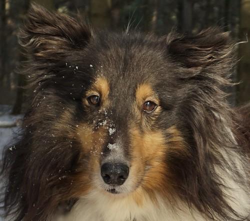 Jasper Close Up