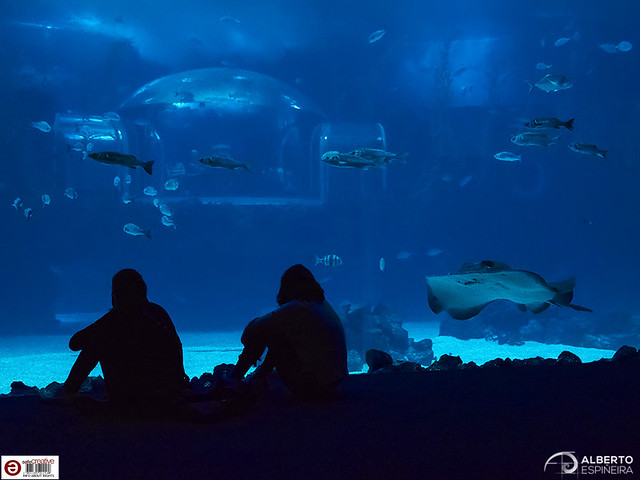 Who observes whom? (Poema del Mar)