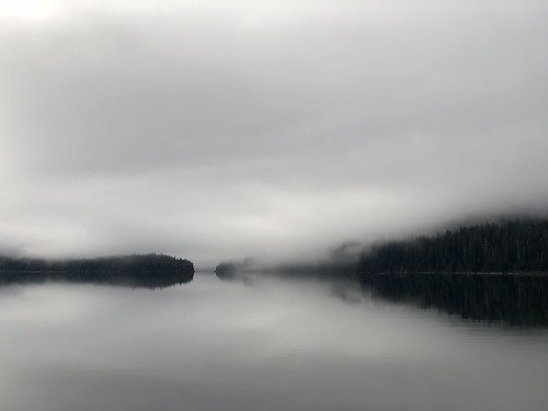 Buttle Lake fog.
