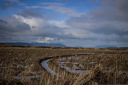 Skagit Valley Flooded Fields-006
