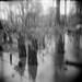 Interference by Joann Edmonds