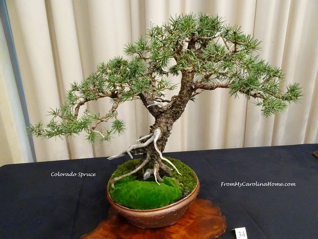 Carolina Bonsai Expo at From My Carolina Home