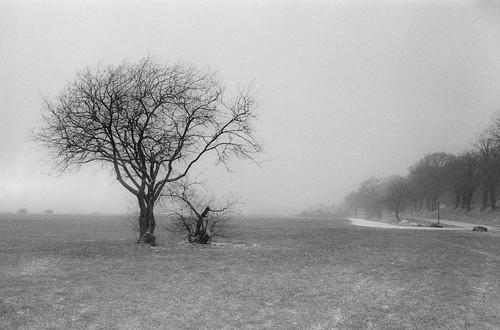 Træet i disen ved Lillebælt