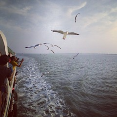 Seagulls come to say goodbye