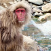 Snow Monkey Park Japan 2018, hanging out down by the river WM