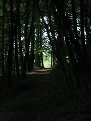 20070831 11939 0707 Jakobus Wald Weg