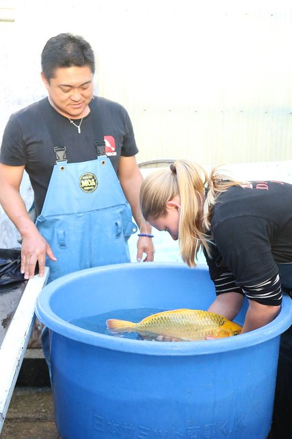Ilse Berns at work at the Dainichi Koi farm