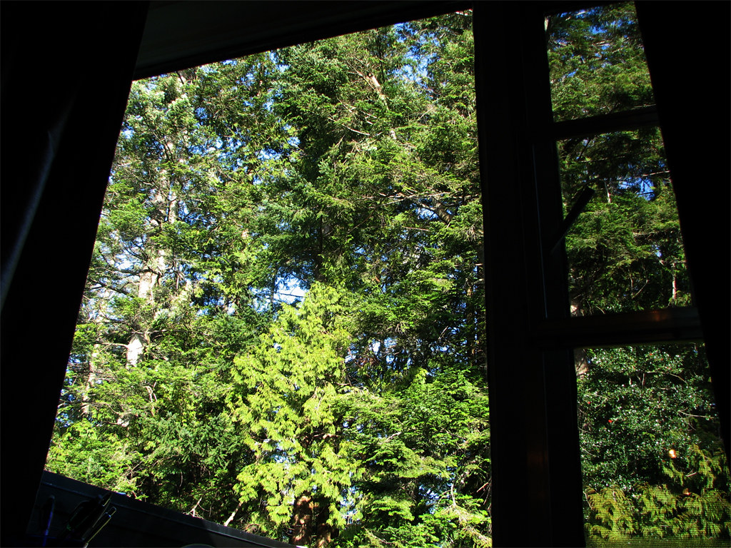 bluesy forest window