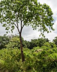 2017 décembre Arusha Landscape