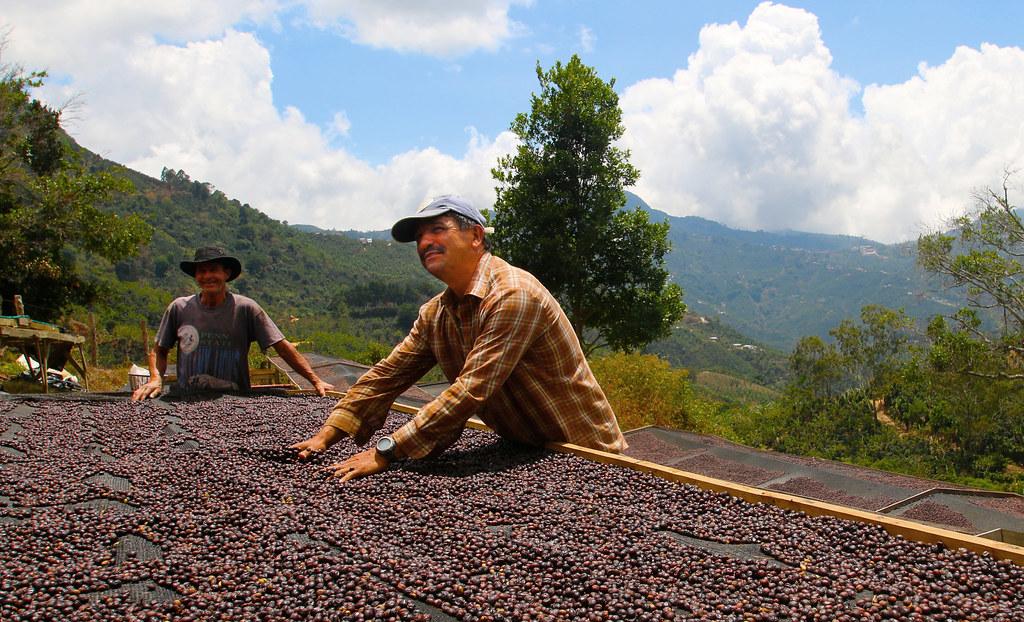 Cà phê chế biến khô ở Costarica