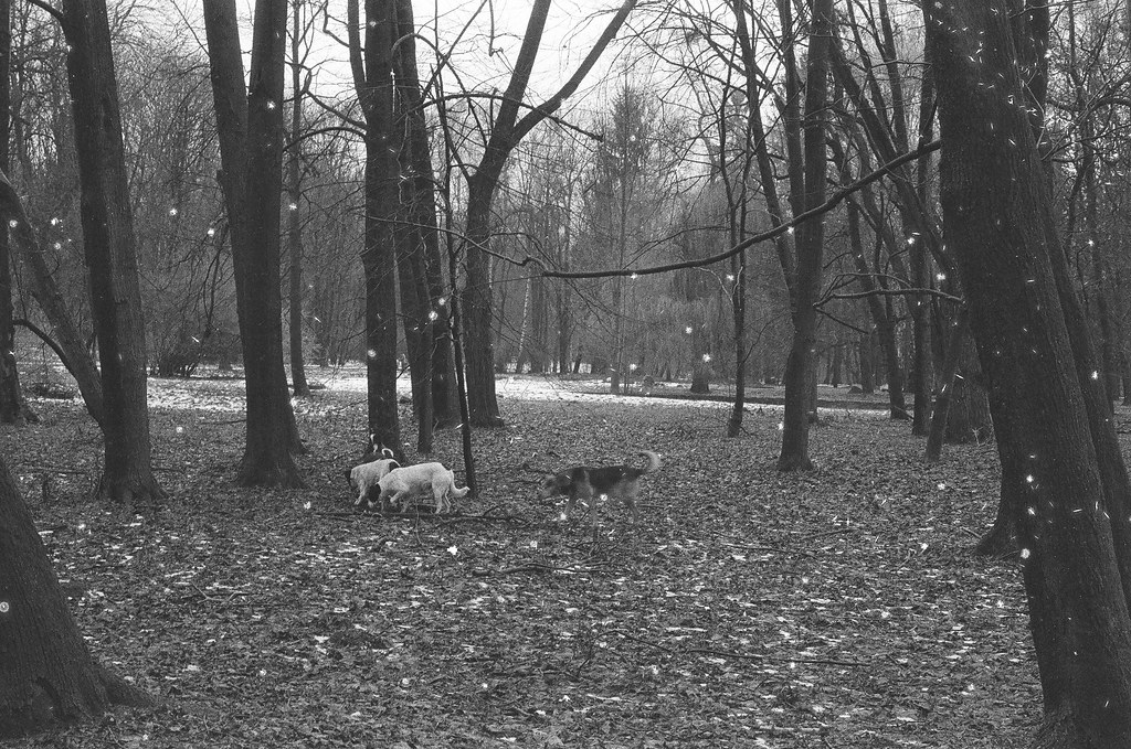 wild dogs in the park