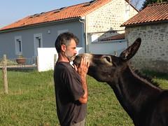 L'éleveur Laurent Carayol sur son exploitation. CC BY SA Clémence Millet-Carayol