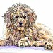 Goldendoodle by molossus, who says Life Imitates Doodles
