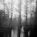 The clearing by Joann Edmonds