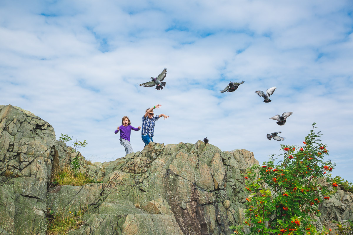 Pigeons fly