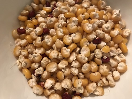 flint corn IMG_1350