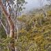 Dove Lake - Tasmania by silvia_mozzon