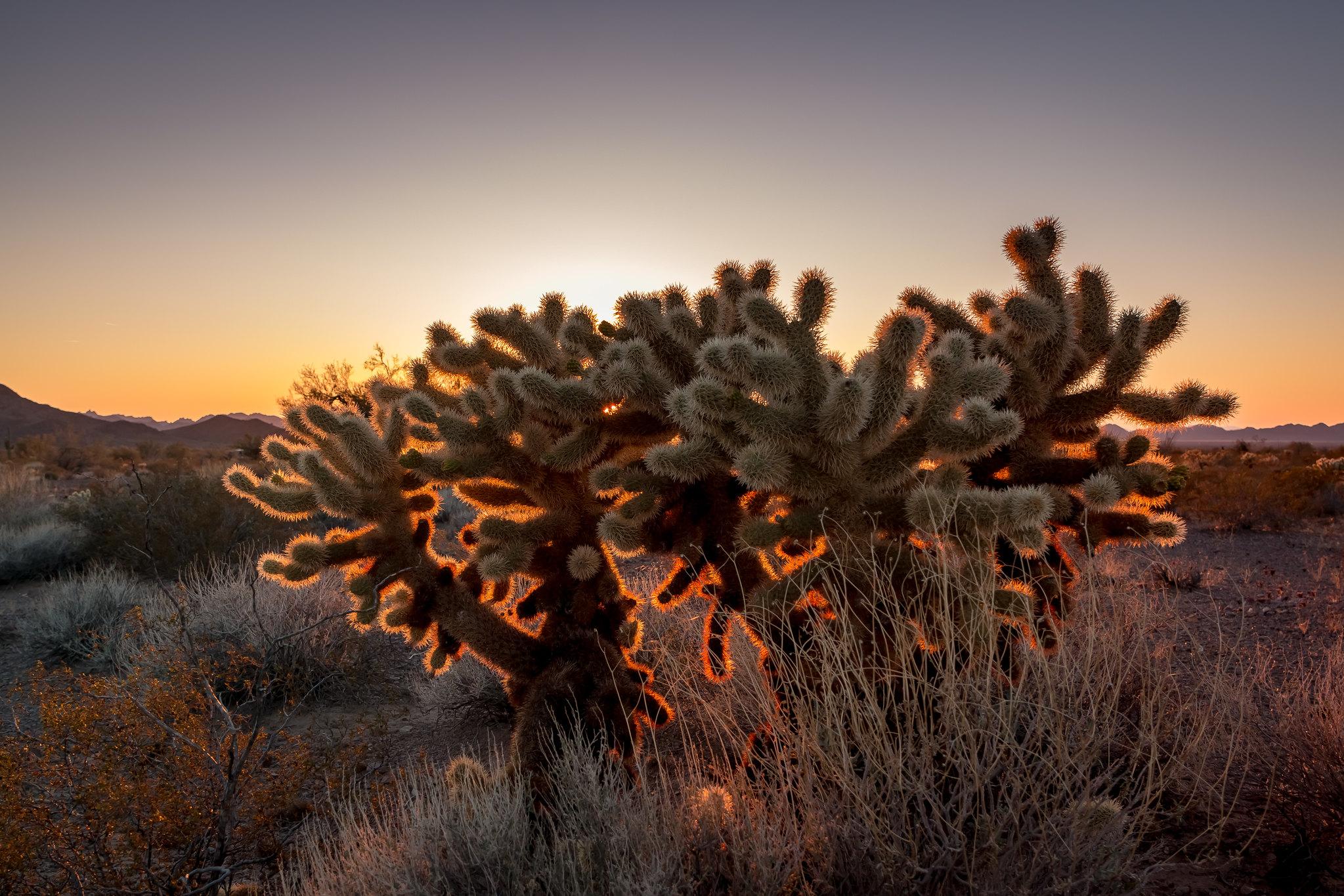 Kofa - Arizona - [USA]