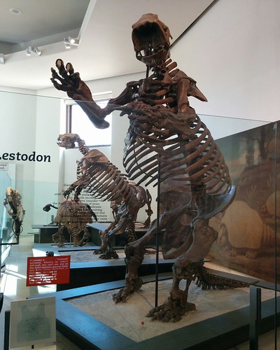 Lestodon #newyorkcity #newyork #manhattan #amnh #fossil #lestodon #sloth #mammal #extinct #americanmuseumofnaturalhistory #latergram