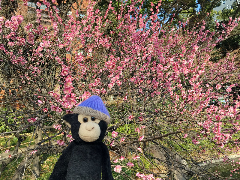 Monkey with sakura