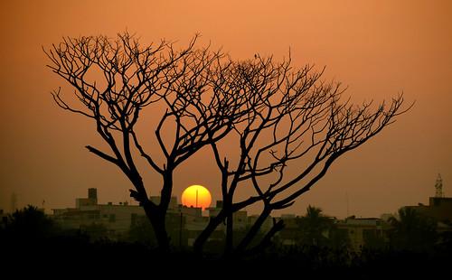sunrise bird orange red ball silhouette sundaylights nikon nikkor