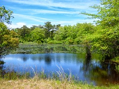 Blackwater Pond