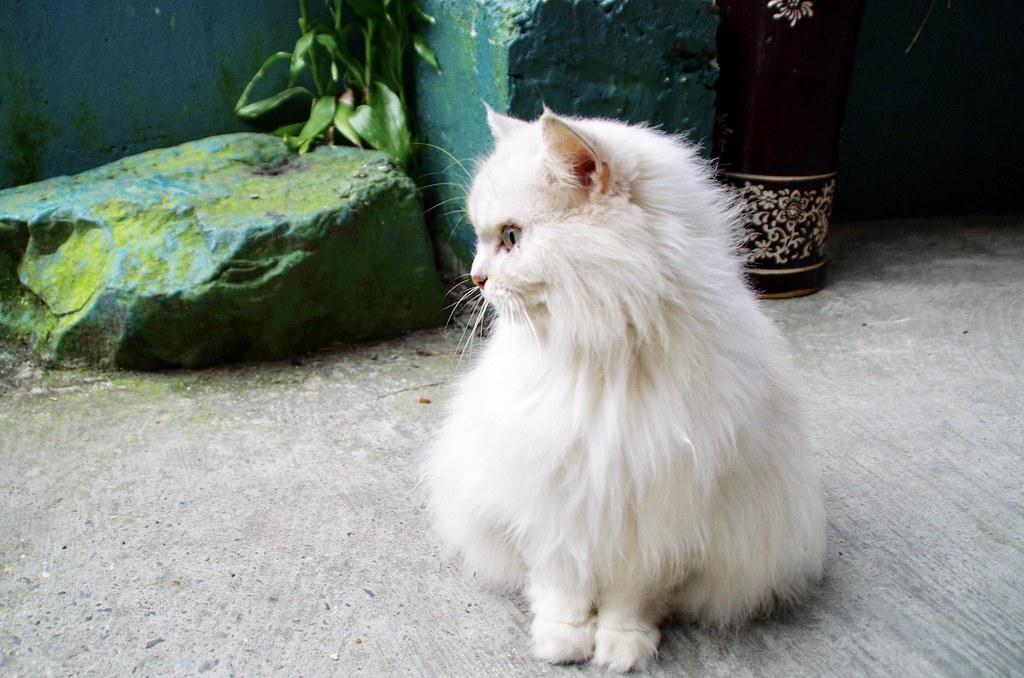 我是貓,所以我驕傲。
